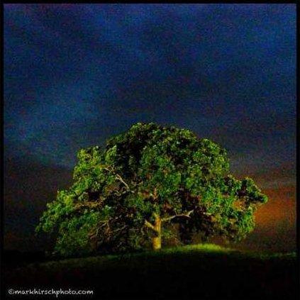 tree photo 19